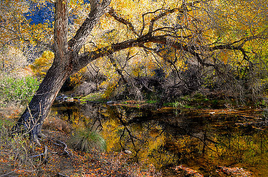 Cottonwood Reflection in Sabino Canyon by Rincon Road Photography By Ben Petersen