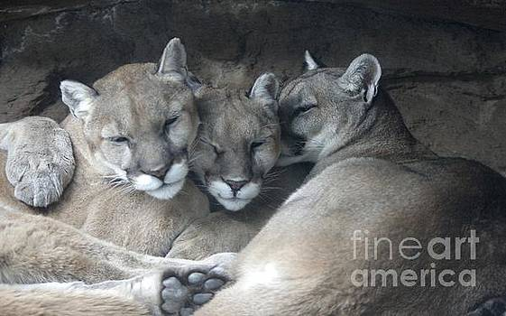 Cougar Kiss by Deniece Platt