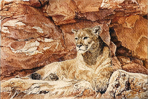 Cougar n' Red Rocks by Judith Angell Meyer