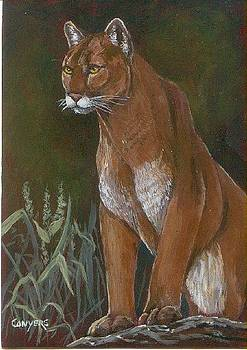 Cougar by Peggy Conyers