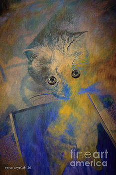 Could it be? Another kitty as pretty as me? by Rene Crystal