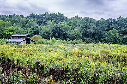 Country barn in a field of yellow blooms by Photo Captures by Jeffery