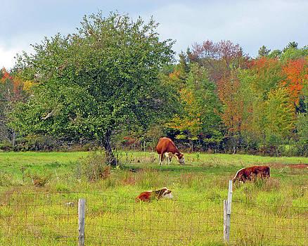 Country Dream by Lynda Lehmann