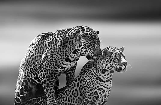 Couple by Ivan Vukelic