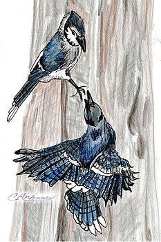 Courtship by Carol Allen Anfinsen