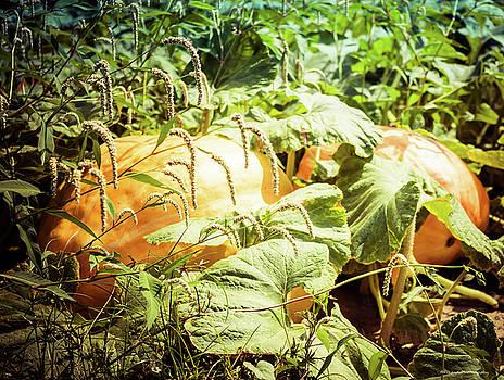 Covered Pumpkin by Debra Forand