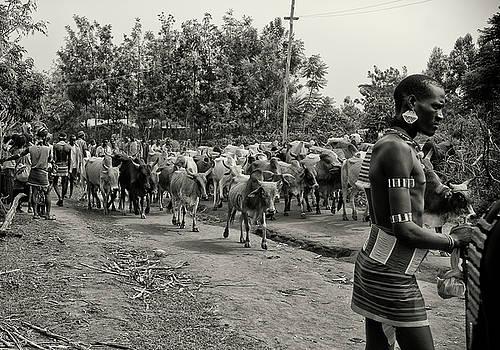 Cows in Key Afar Market by Nichon Thorstrom