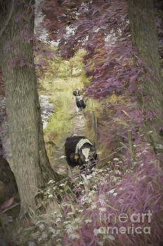 Patricia Hofmeester - Cows walking on a riverside path in England