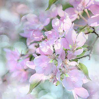Crab Apple Blossoms Square Format by Theresa Tahara