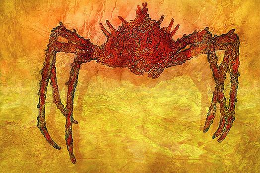 Crabby by Jack Zulli