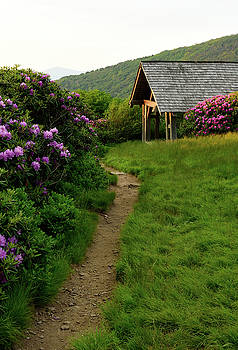 Craggy Gardens Pathway by Jamie Pattison