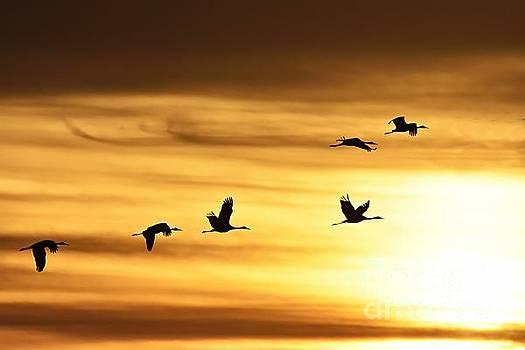 Larry Ricker - Cranes at Sunrise 2