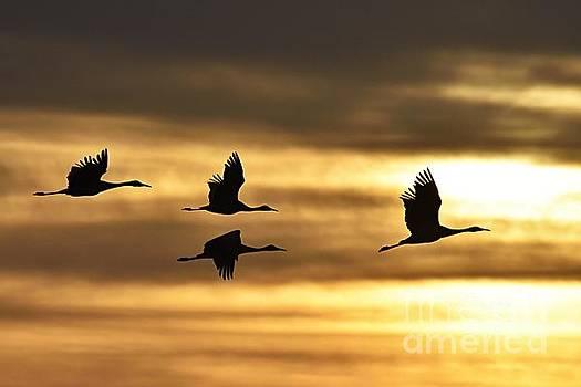 Larry Ricker - Cranes at Sunrise