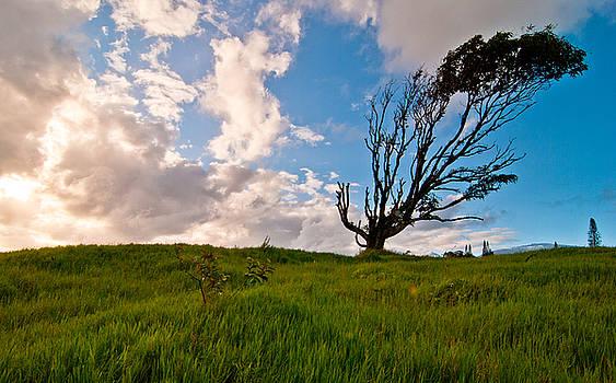 Crazy Tree, Maui, Hawaii by Preston Broadfoot