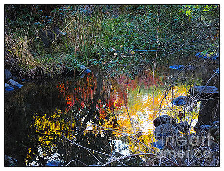 Creek Bursting in Calming Color by Leslie Hunziker
