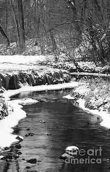 Creek In The Woods In Winter by Tamara Becker