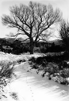 Creekside Winter by Allan McConnell