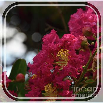 Crepe Myrtle Flowering Tree by Debby Pueschel
