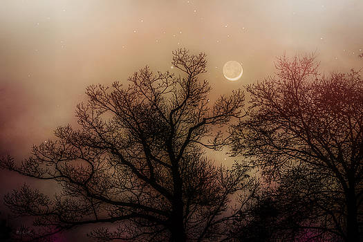 Crescent Between The Trees by Bob Orsillo