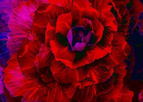 Crimson Cabbage by Don Steve