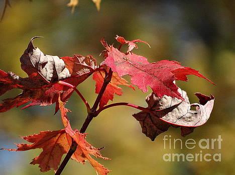 Crimson Fall by J L Zarek