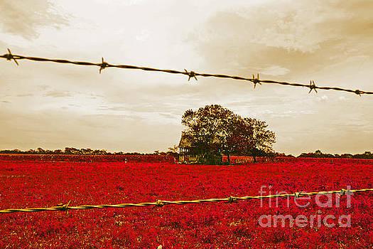 Crimson Farmland by Beth Ferris Sale
