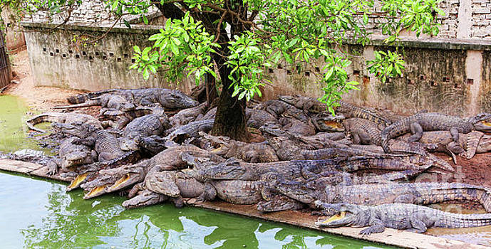 Chuck Kuhn - Crocodile Cluster