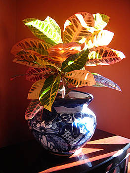 Amy Vangsgard - Croton in Talavera Pot