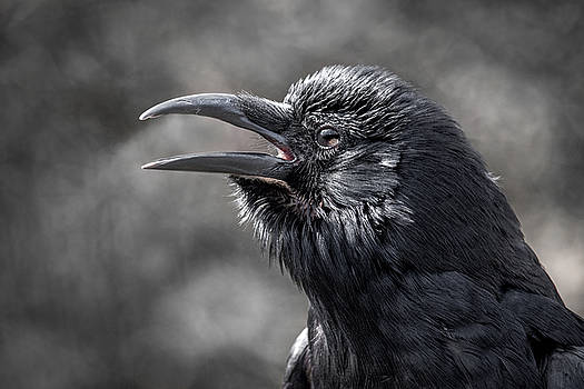 Crow by Angie Rea