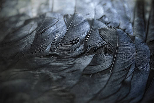 Crow Feathers by Angie Rea