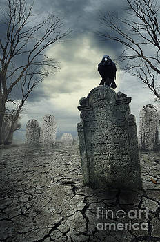 Crow on the tombstone by Jelena Jovanovic