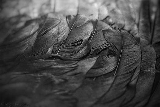 Crow Wing Black and White by Angie Rea