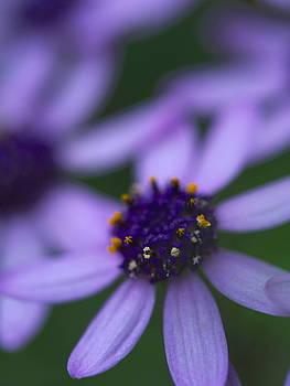 Crowned with Purple by Jessica Myscofski