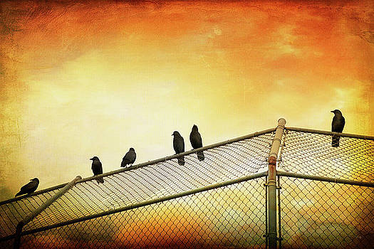 Crows On The Backstop by Theresa Tahara