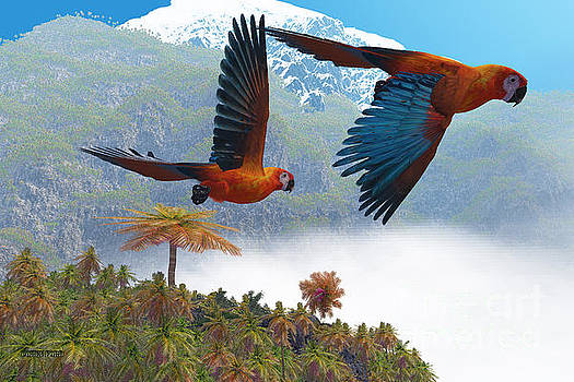 Corey Ford - Cuban Red Macaw
