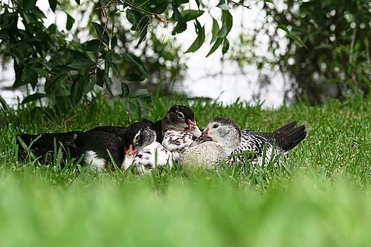 Cuddle Buddies by David S Reynolds