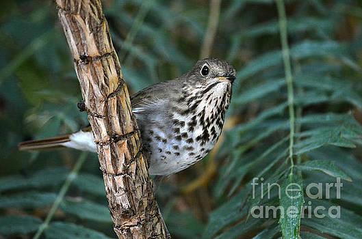 Curious Bird by Dan Holm