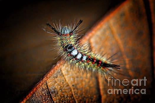 Curious Caterpillar by Mariola Bitner