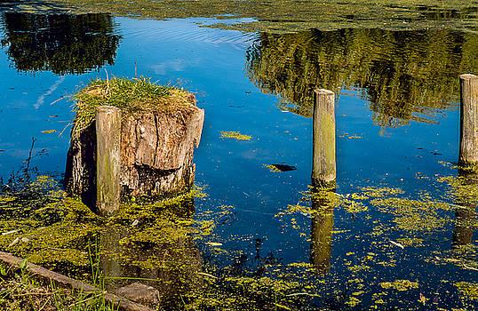 Cut tree in Lakeside by Sivakolunthu Loganathan