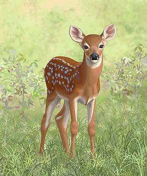 Cute Whitetail Deer Fawn by Crista Forest