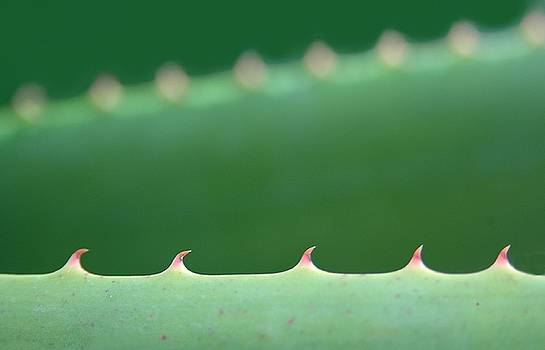 Cutting Edge Cactus by Dan Holm
