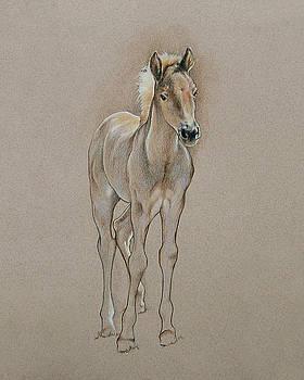 Cyndee's Foal by Cindy Davis