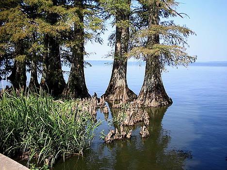 Cypress by CGHepburn Scenic Photos