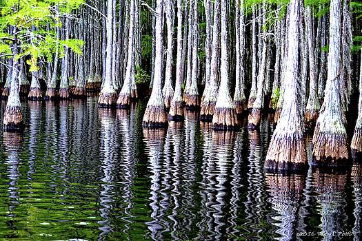 Cypress Tree Reflection by Tara Potts