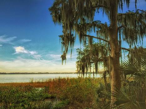 Cypress trees on Lake Dora by Stella Oliver