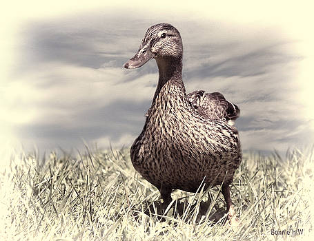Dabbling Duck by Bonnie Willis
