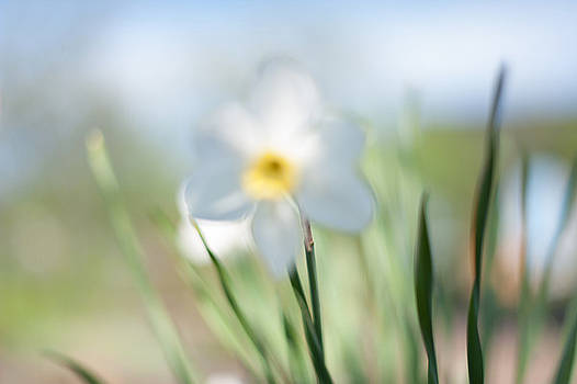 Jenny Rainbow - Daffodil Lightness. Impressionism