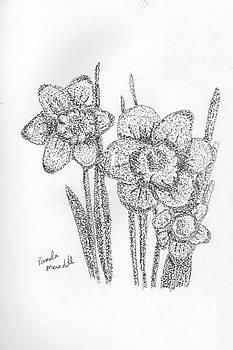 Daffodils by Pamela Meredith