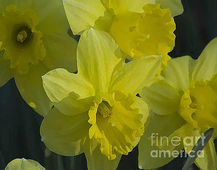 Daffodils by Robert  Suggs