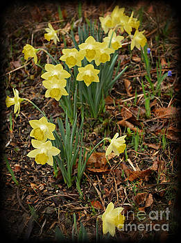 Daffodils with a Purple Flower by Eva Thomas